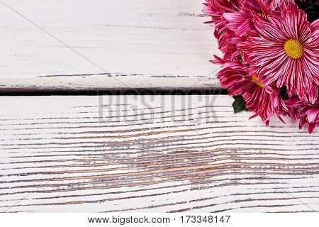 Chrysanthemums on wooden background. Romantic gift for a woman.