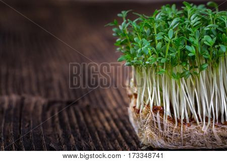 Fresh Cress Sprouting Ready For Salad