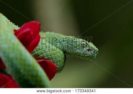 Beautiful green snake somewhere in the tropics