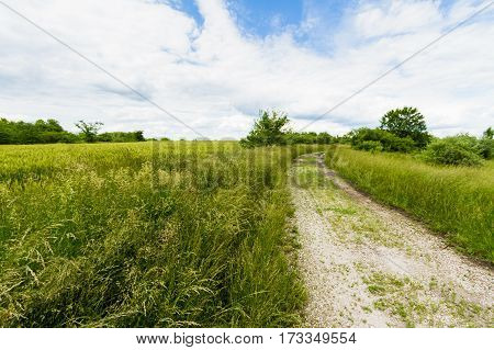 Meadow with tallgrass and a gravel road or pathway going through it.