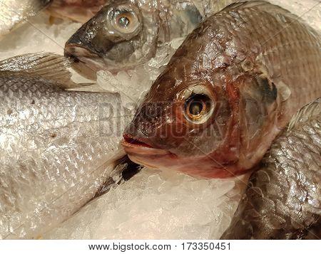 Tilapia Fish In Fresh Eye On The Ice Tray