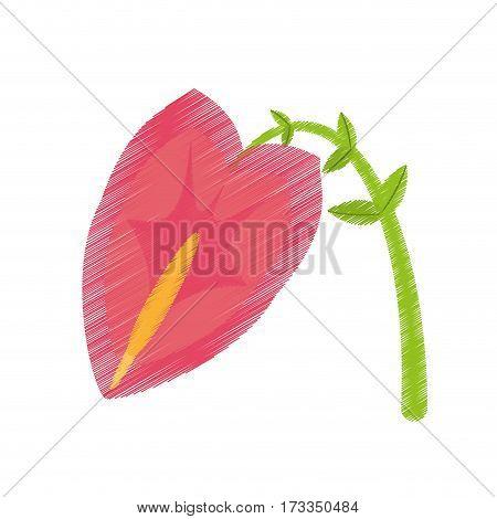 drawing anthurium leaf plant exotic vector illustration eps 10