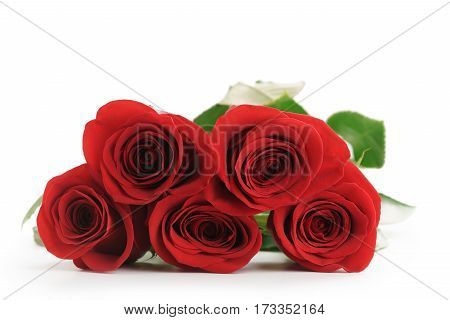 five fresh red roses isolated on white background