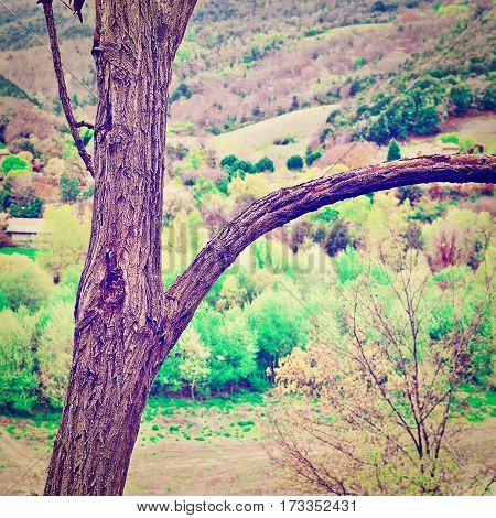 Trunk of Tree on the Background of Italian Landscape Instagram Effect