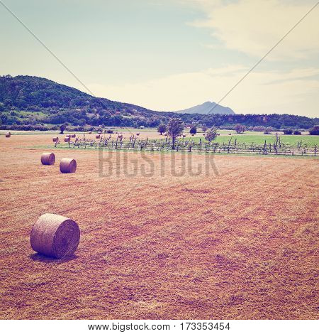 Landscape with Many Hay Bales and Vineyard in Italy Instagram Effect