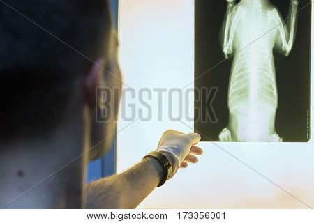 Close-up of veterinary physician examining pet radiograph