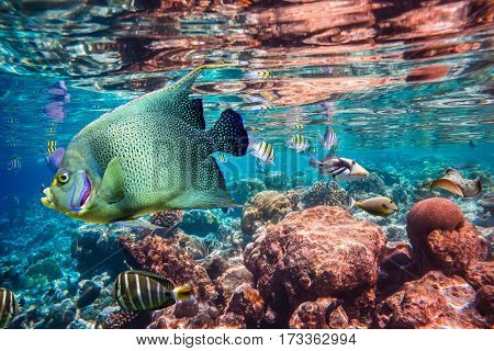 Reef with a variety of hard and soft corals and tropical fish.