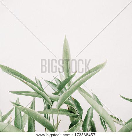 Green leaf plants near beige wall. Minimalistic floral background.