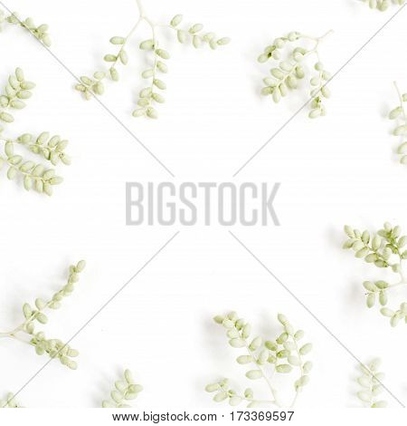 Frame wreath of green branches on white background Flat lay top view. Flower background.