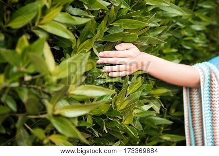 Cropped image of woman which touching the shrub