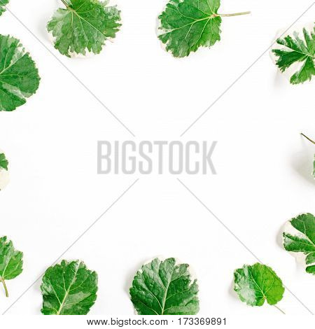 Frame wreath of green leaves on white background Flat lay top view. Flower background.
