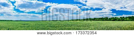 Splendid green field and the fantastic blue sky with clouds.