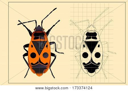Beetle and Beetle drawing on colored paper. Vector illustration