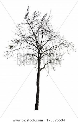 Tree (dead Tree) Isolated On White Background