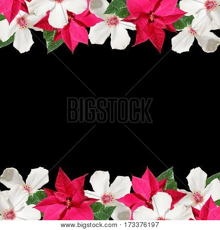Beautiful floral background of Christmas poinsettia and white hibiscus