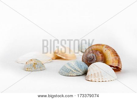 several colored aquarium seashells on white background