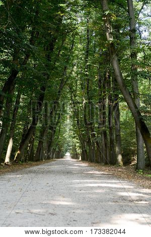 Tree lined avenue on Lombardy in Italy