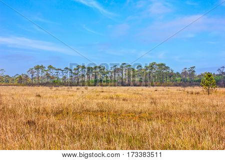 the golden vast meadow with blue sky