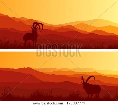 Set of horizontal wide banners of goats grazing in meadows at sunset.