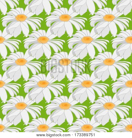 Seamless background of camomile. Large flowers on a light green background. Vector illustration.