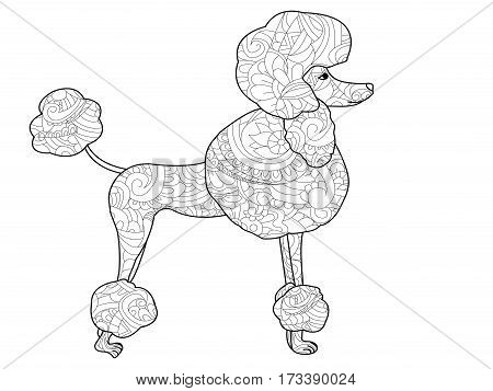 Poodle dog coloring book for adults vector illustration. Anti-stress coloring for adult. Zentangle style. Black and white lines. Lace pattern