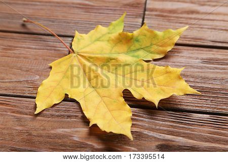 Autumn leaf on the brown wooden table