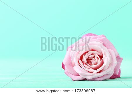 Beautiful Pink Rose On A Green Background
