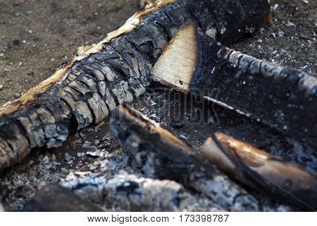 Charred wood from the fire on the earth, ash
