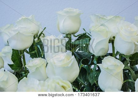 Bouquet Of Large White Roses