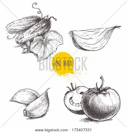 Hand drawn sketch style vegetables set. Ripe tomatoes onion slice cucumbers with leaf and garlic. Vintage fresh farm market food illustration.