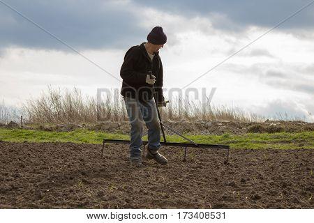 grandfather rake makes tracks for planting potatoes