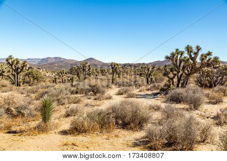 Joshua Tree National Park is a vast protected area in southern California. It's characterized by rugged rock formations and stark desert landscapes.