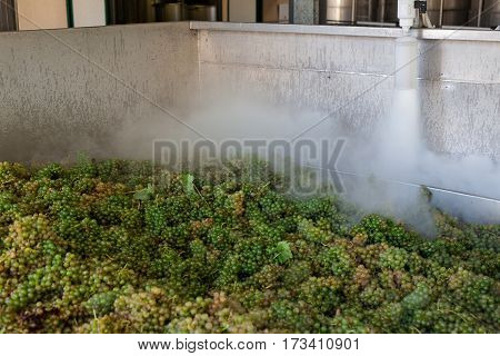 White grape bunches processed with nitrogen in a large stainless steel tub