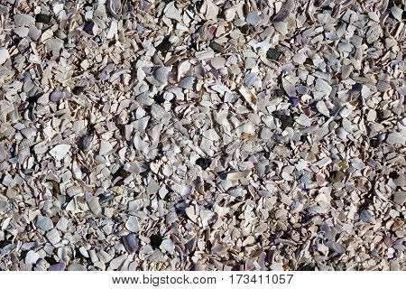 Flat view of pathway consisting of finely crushed seashells