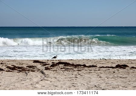 Sunny day on Florida beach with lone seagull