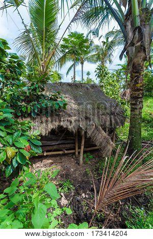 Bali Island, Indonesia - August 25, 2008: A Small Hut In The Jungle Near A Rice Field