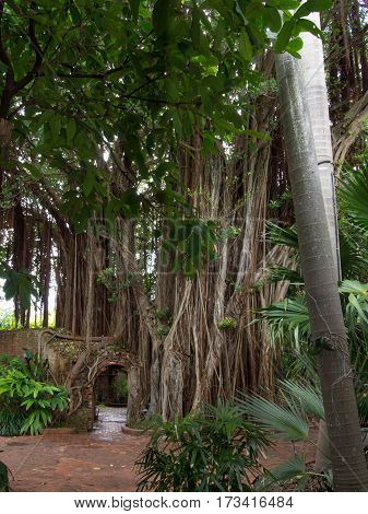 Tree Vines Over Growing the Brick Doorway in Key West Florida