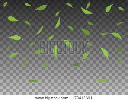 Vector illustration set of green leaves falling. Isolated transparent background. Flat style. Elements of objects for spring design. Various forms of tree leaf.