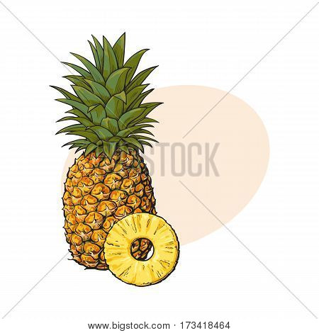 Whole, unpeeled, uncut, vertical pineapple and peeled round slice, sketch style vector illustration with place for text. Realistic hand drawing of whole and slice of fresh, ripe pineapple