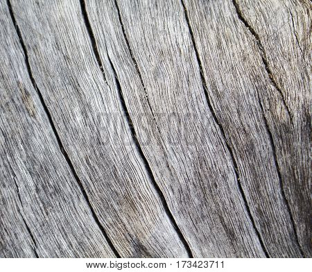 Wood texture closeup photo. White timber board with weathered crack lines. Natural background for shabby chic design. Pale wooden table image. Silver tree trunk without bark. Sea wood monochrome image