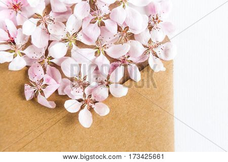 close up of opened craft paper envelope full of spring blossom sacura flowers on white background. top view. concept of love.
