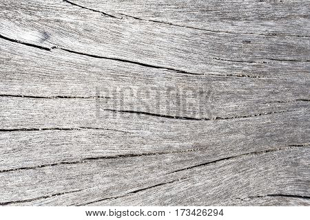 White wood texture close up photo. White and grey wood background. White old tree near the sea. Curves and lines on rustic timber. Rough timber texture. Sea wood backdrop. Grey wood achromatic image