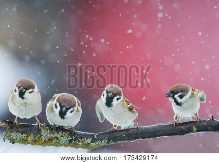 funny birds funny arguing in a Park during a snowfall