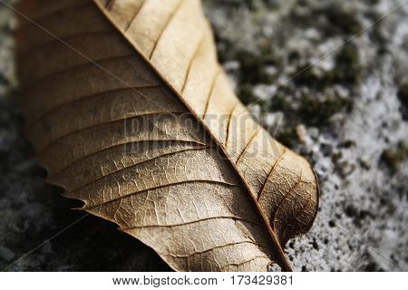 Interesting perspective of the texture of a leaf