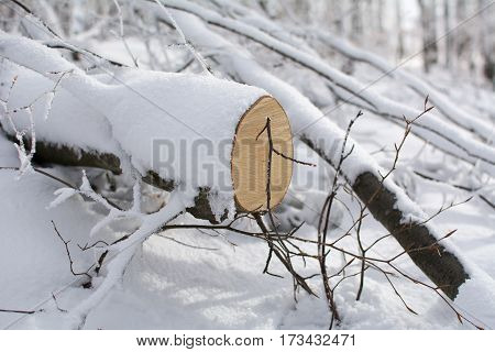 Chump covered with snow. Winter landscape on mountain. Stara Planina, Serbia-Europe.