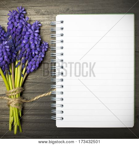 Muscari flowers and blank notebook on a dark wooden table