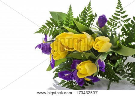 bunch of fresh spring yellow tulips and blue irises close up isolated on white background