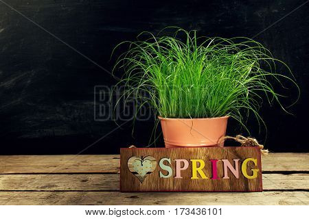 Beautiful Flower Pot with Fresh Green Grass on Wooden Table. Horizontal with Copy Space. Easter Spring Concept.
