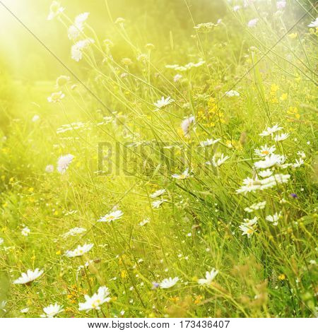 Summer meadow illuminated by the sun rays
