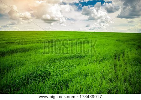 Green Grass Field And Bright Blue Sky Background
